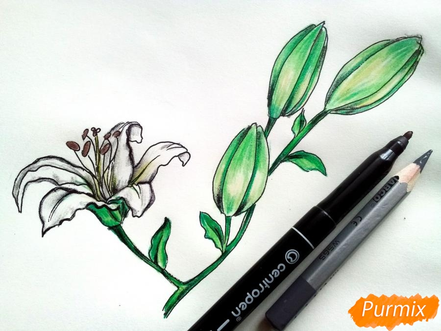 Рисуем белую лилию - фото 9