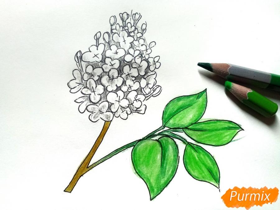 Рисуем белую сирень - шаг 6