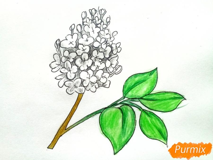 Рисуем белую сирень - шаг 7