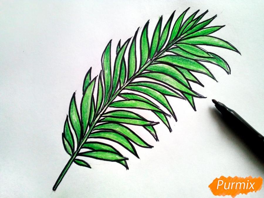 Рисуем большой лист пальмы - фото 5