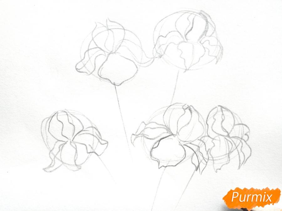 Рисуем букет ирисов цветными карандашами - шаг 2