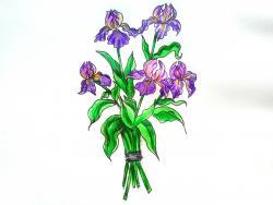 Рисунок букет ирисов цветными