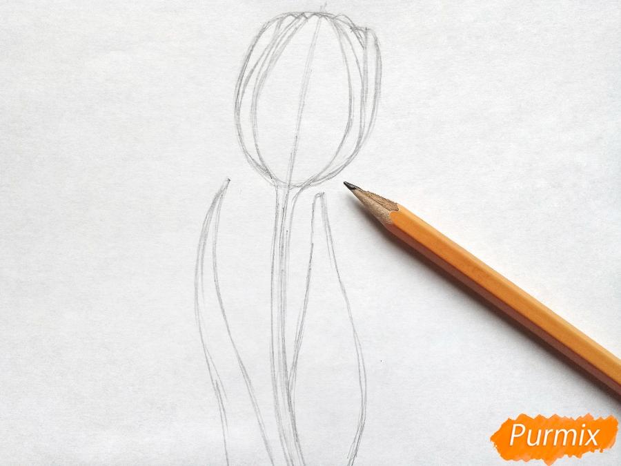 Рисуем бутон тюльпана - фото 3