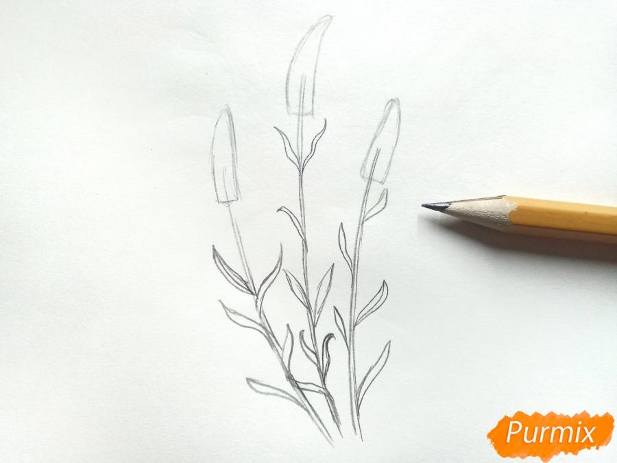 Рисуем цветы люпины - шаг 3