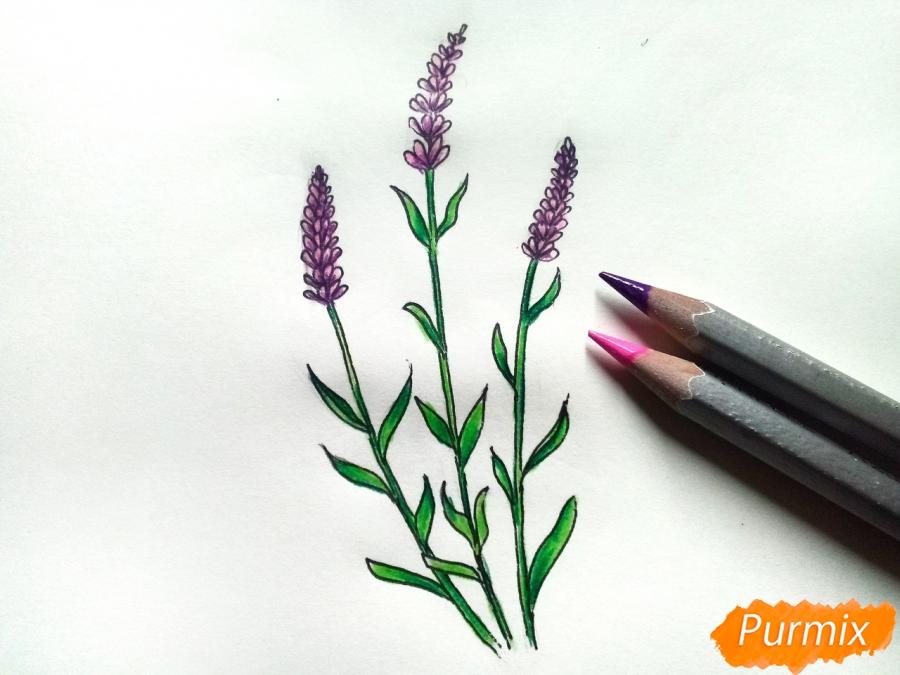 Рисуем цветы люпины - шаг 7