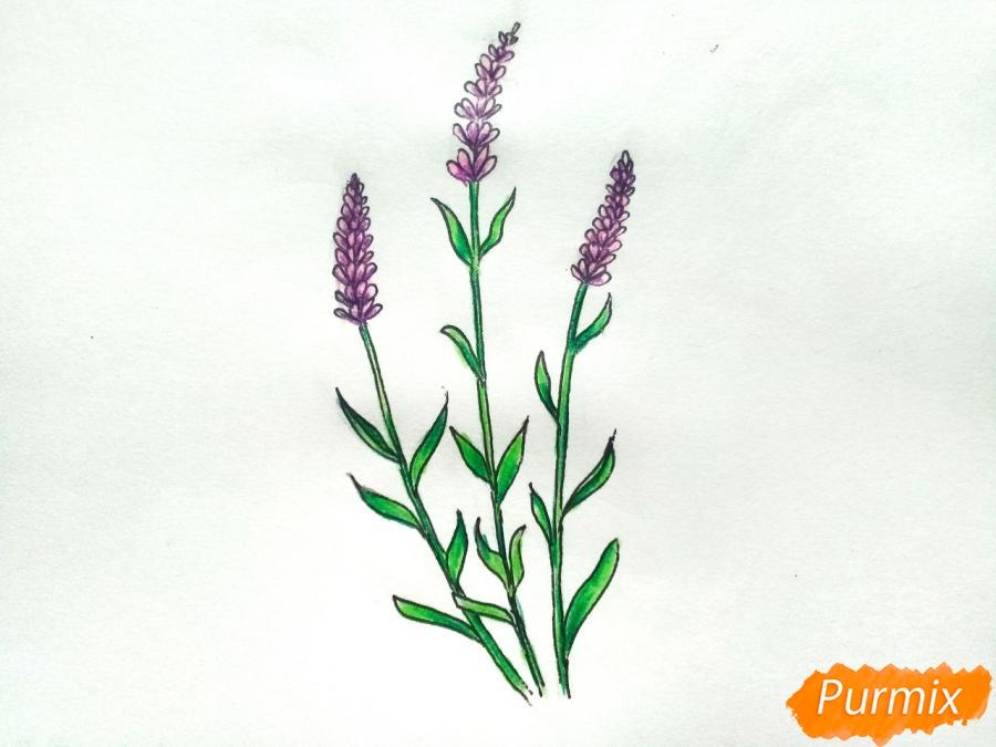 Рисуем цветы люпины - шаг 8