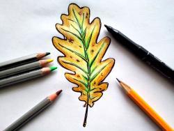дубовый лист карандашом