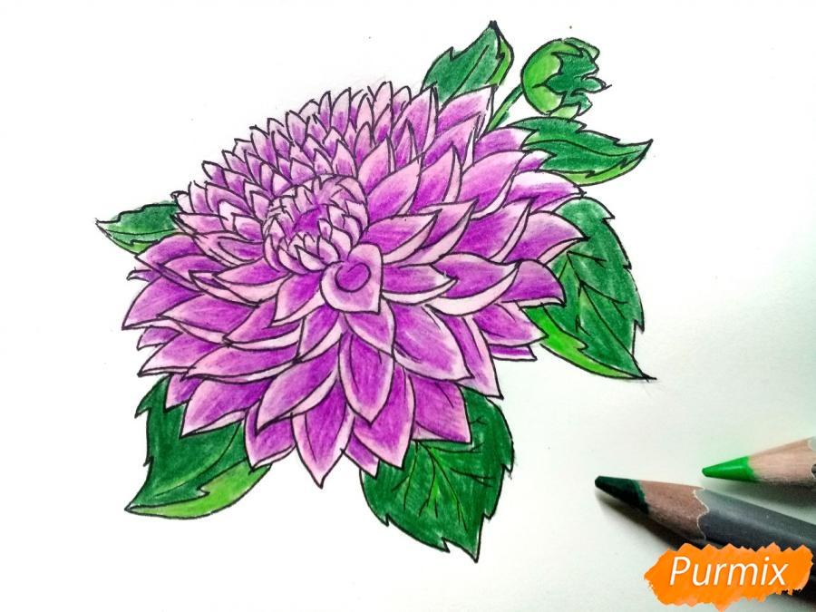 Рисуем цветок георгин - фото 8