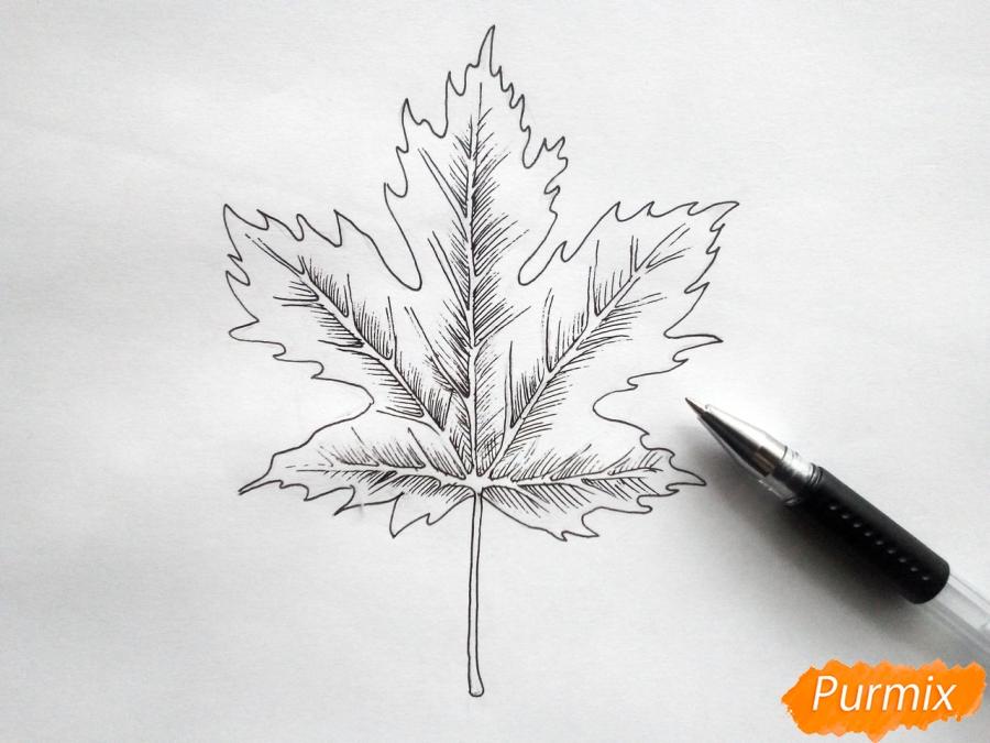 Рисуем кленовый лист черной ручкой - фото 5
