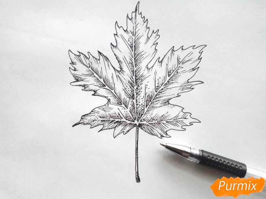 Рисуем кленовый лист черной ручкой - фото 6