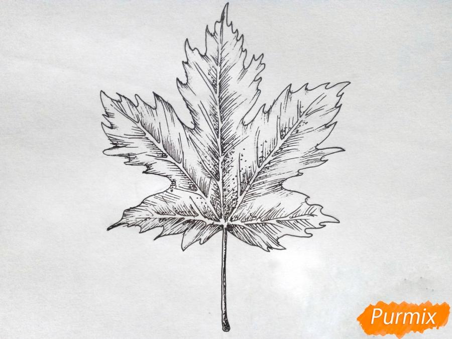 Рисуем кленовый лист черной ручкой - фото 7