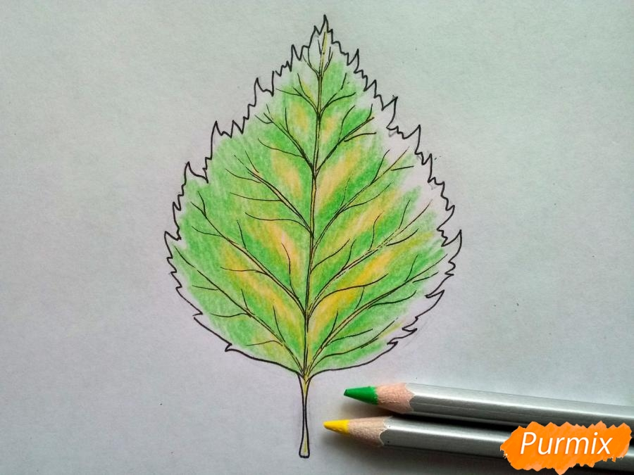 Рисуем лист березы карандашами - фото 4