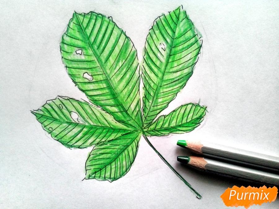 Рисуем лист каштана карандашами - фото 5