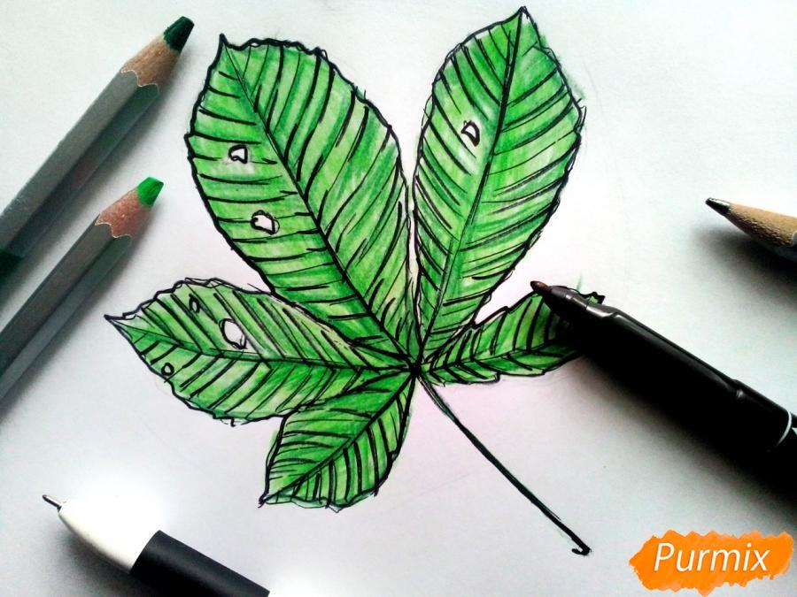 Рисуем лист каштана карандашами - фото 7