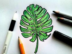 лист пальмы карандашами
