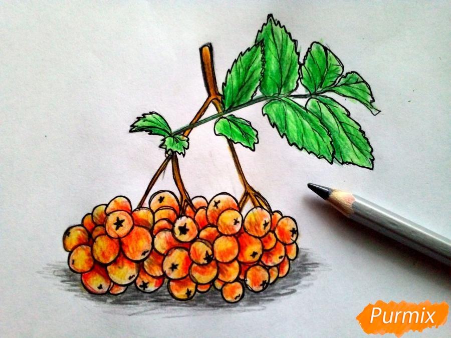 Рисуем лист рябины с ягодами - фото 7