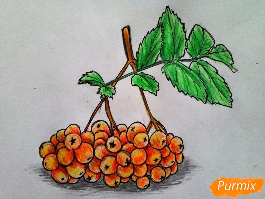 Рисуем лист рябины с ягодами - фото 8