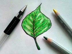 лист тополя карандашом