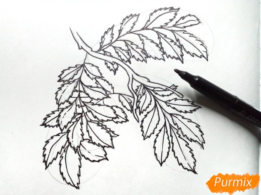 Рисуем листья рябины на ветке без ягод - фото 4