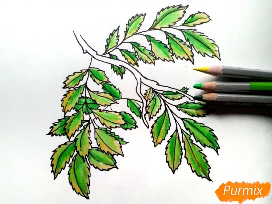 Рисуем листья рябины на ветке без ягод - фото 5