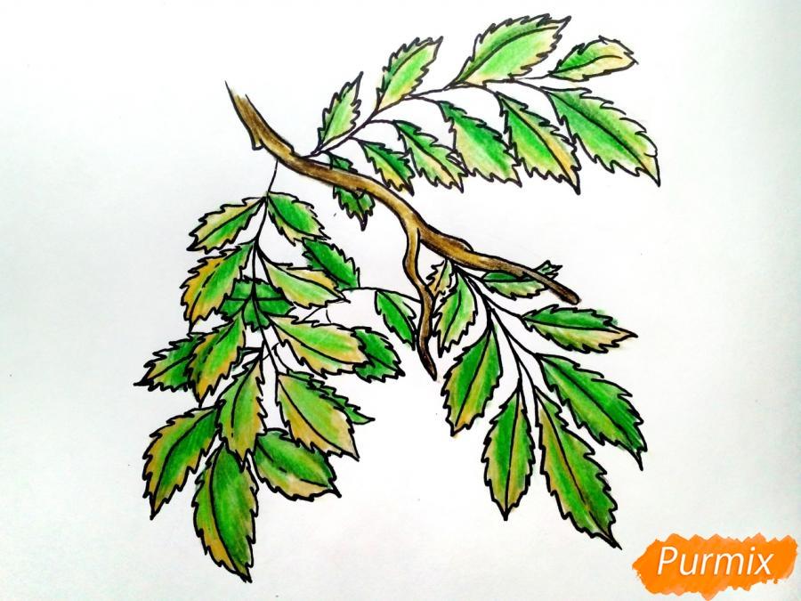 Рисуем листья рябины на ветке без ягод - фото 7
