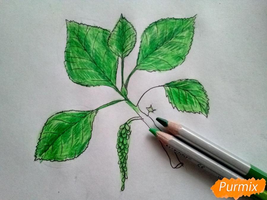 Рисуем листья тополя на ветке - фото 5
