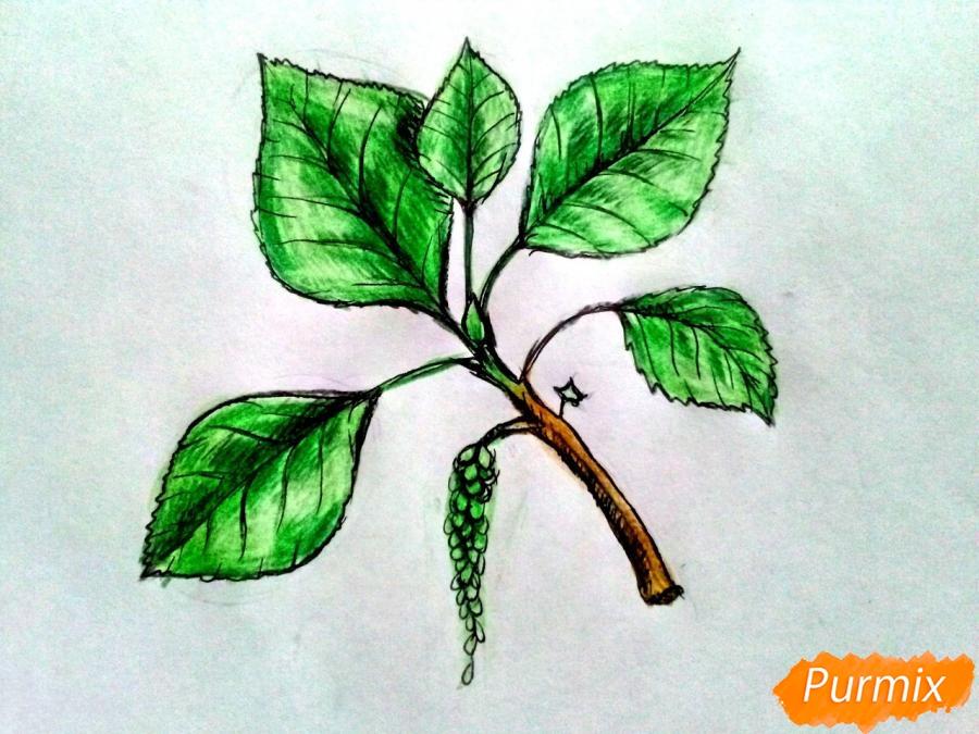 Рисуем листья тополя на ветке - фото 7