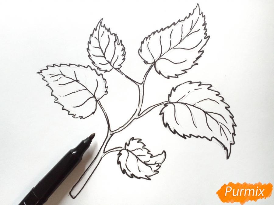 Рисуем осеннюю ветку с листьями - фото 4