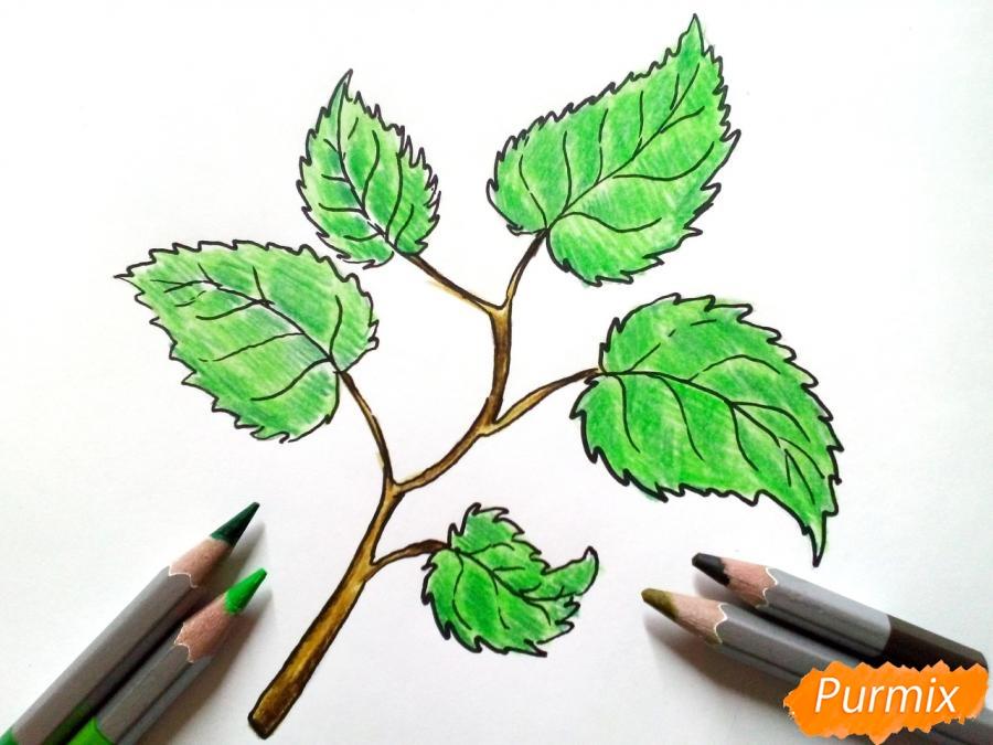 Рисуем осеннюю ветку с листьями - фото 5