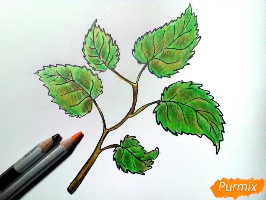 Рисуем осеннюю ветку с листьями - фото 6