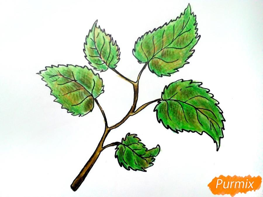 Рисуем осеннюю ветку с листьями - фото 7