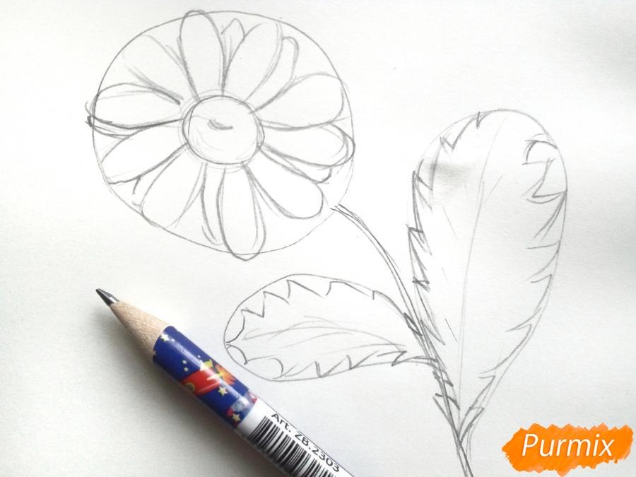 Ромашка с большими листиками - фото 3