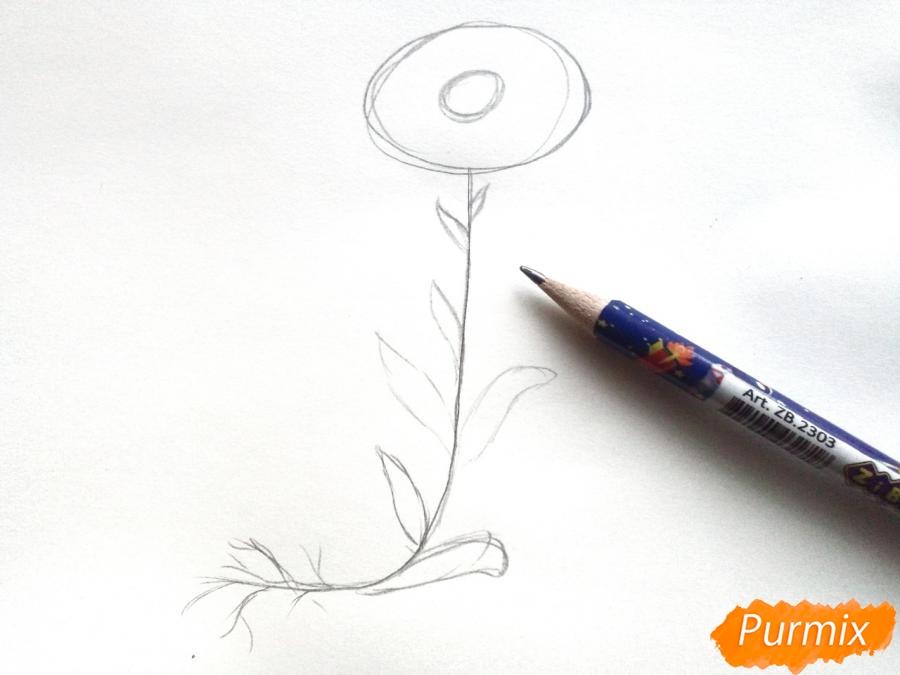 Ромашка с корнем - фото 2