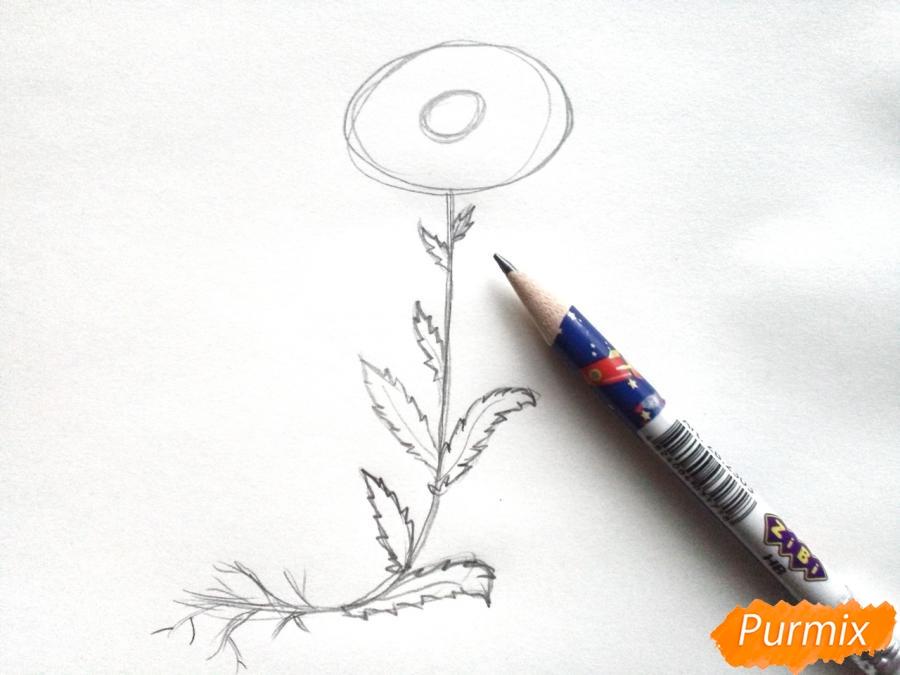 Ромашка с корнем - фото 3