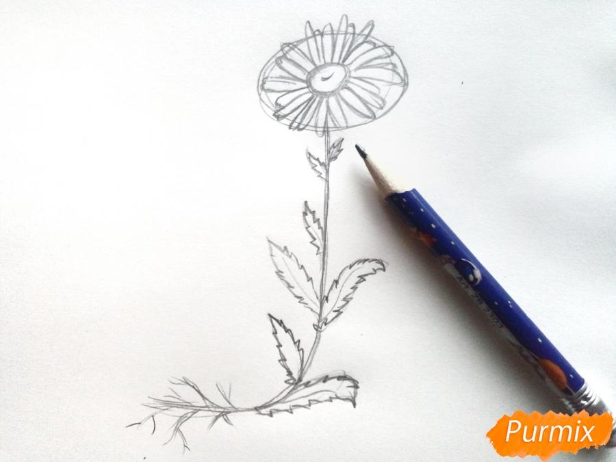 Ромашка с корнем - фото 4
