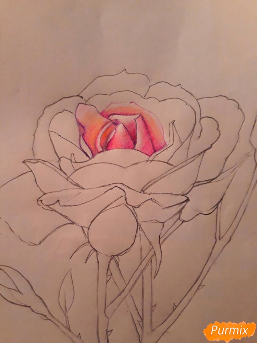 Фото цветов розы как рисовать