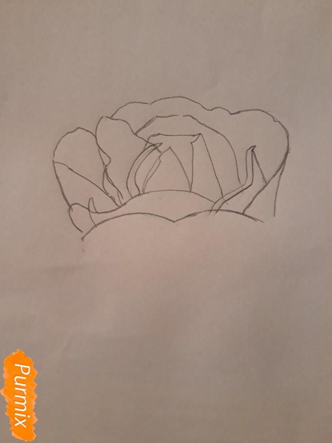 Рисуем розу цветными карандашами - фото 3