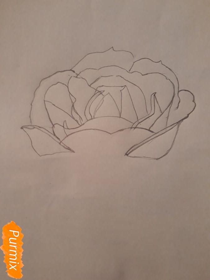 Рисуем розу цветными карандашами - фото 5