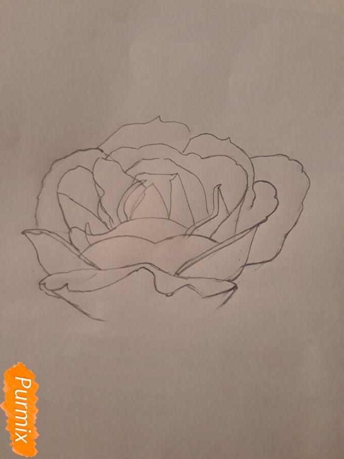 Рисуем розу цветными карандашами - фото 6