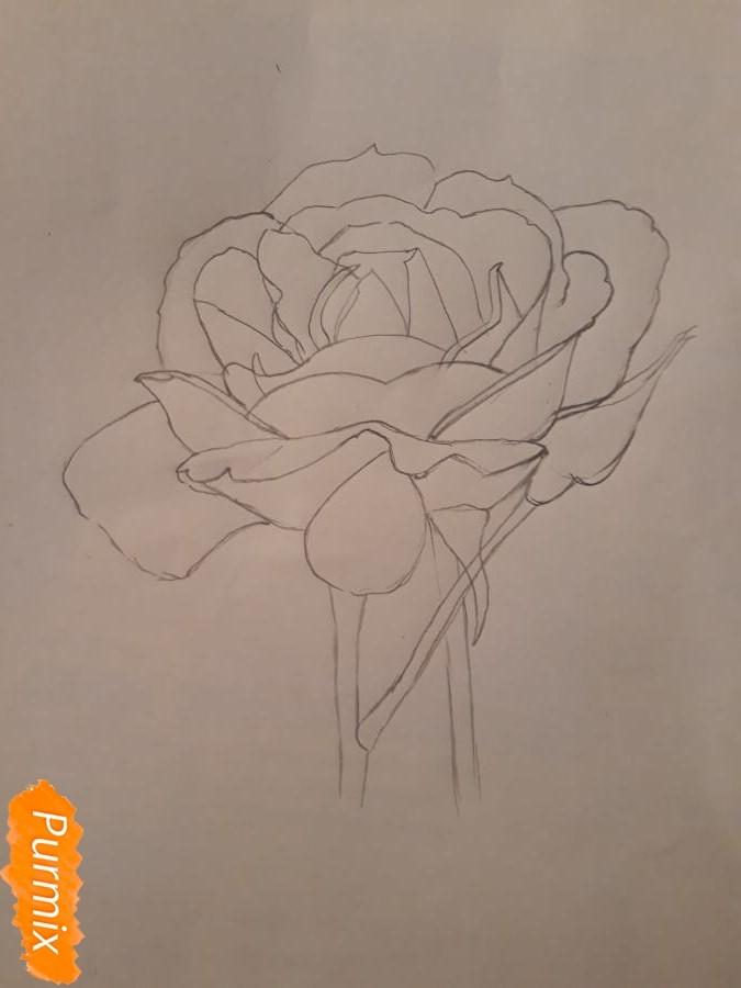 Рисуем розу цветными карандашами - фото 7