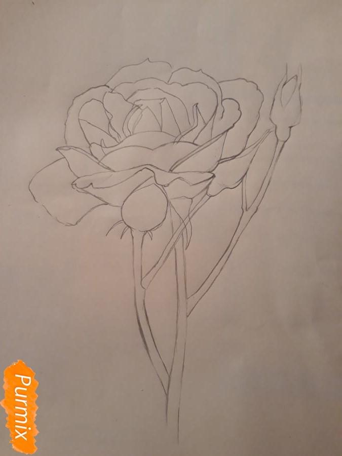 Рисуем розу цветными карандашами - фото 8
