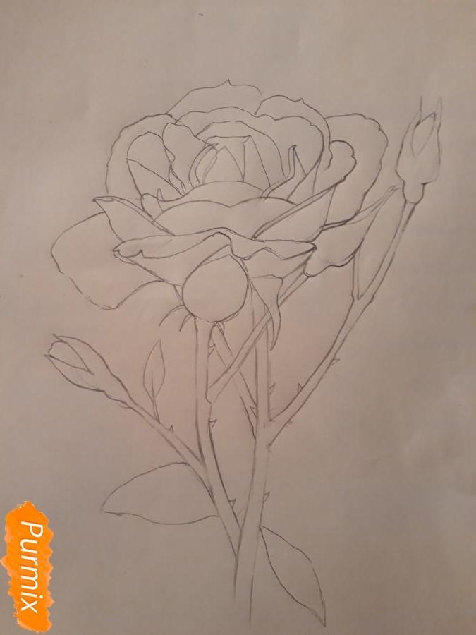 Рисуем розу цветными карандашами - фото 9