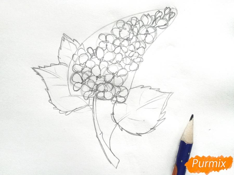 Рисуем сирень карандашами - шаг 4