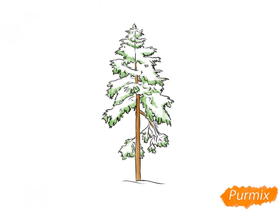 Рисуем сосну зимой - фото 8