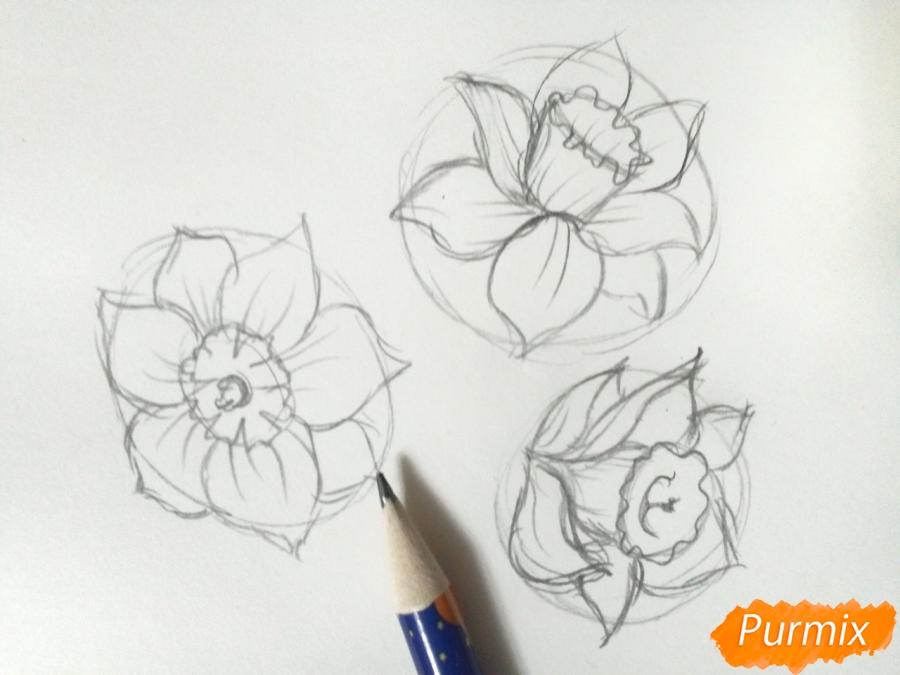 Рисуем Нарциссы - фото 3