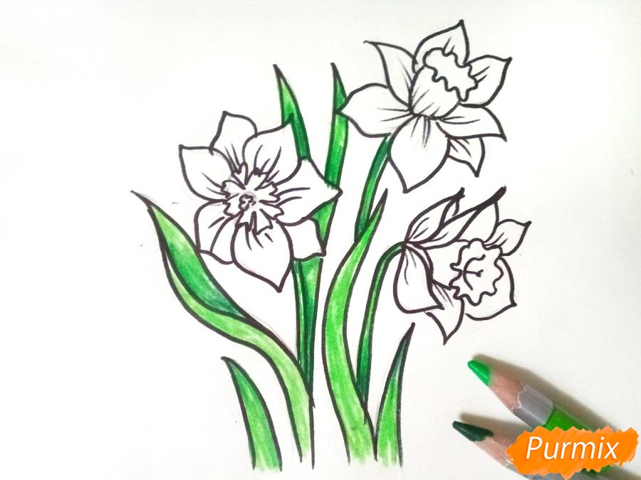 Рисуем Нарциссы - фото 6