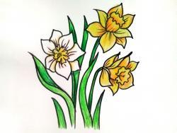 Нарцисс . 6 уроков