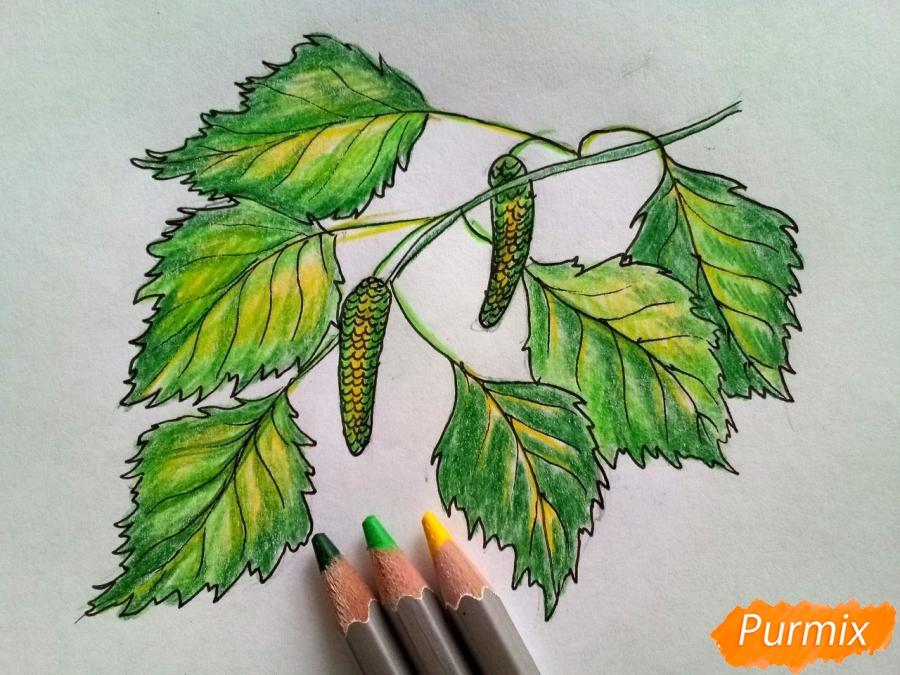 Рисуем ветку березы с листьями - фото 5