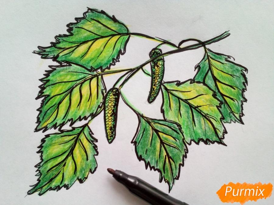Рисуем ветку березы с листьями - фото 6