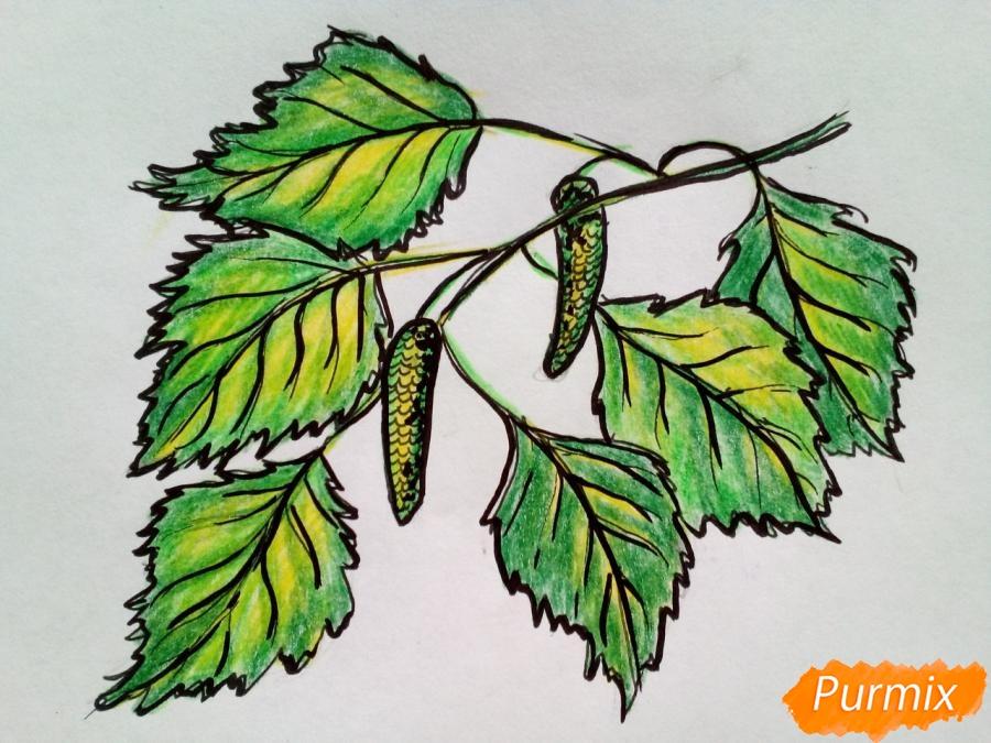 Рисуем ветку березы с листьями - фото 7